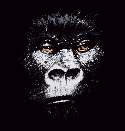 Obrázek produktu Pánské tričko Gorilla Harambe